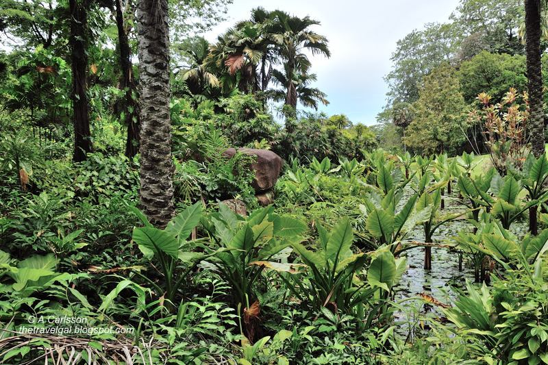 Victoria botanical garden seychelles