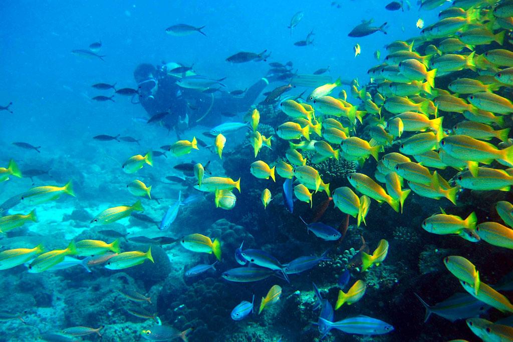 Mauritius attractions: Underwater