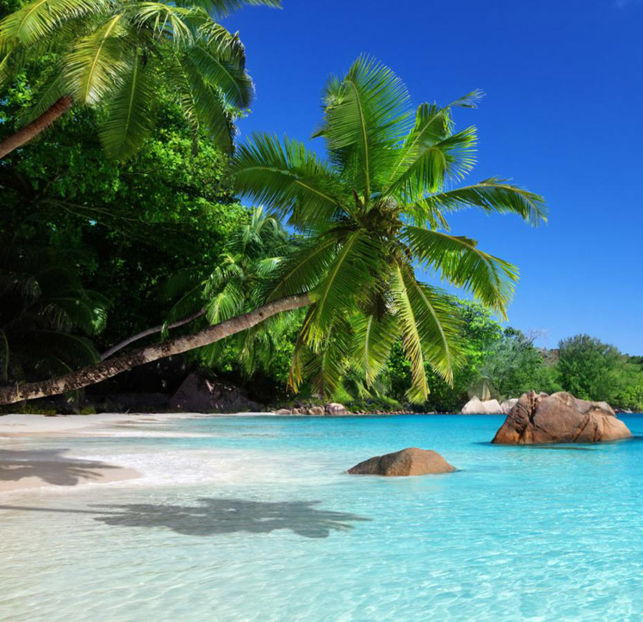 Fly to the Seychelles: Honeymoon