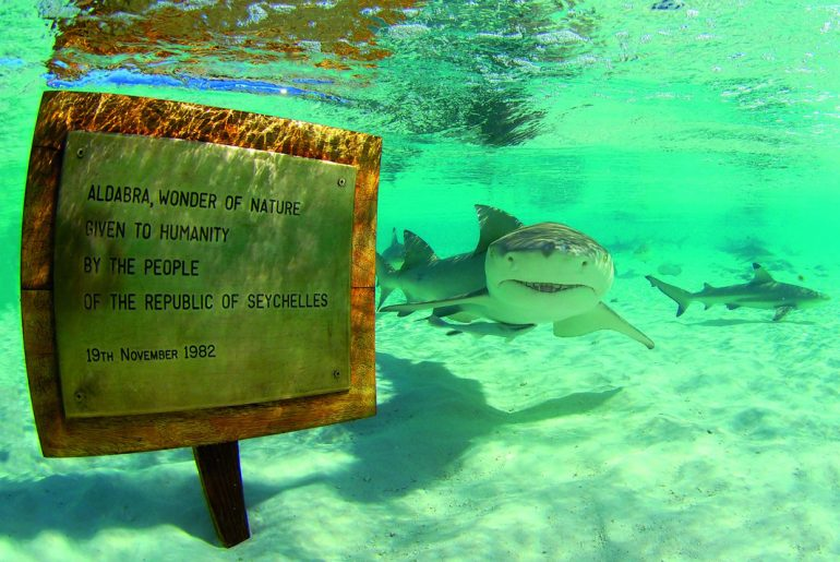 Requins Atoll d'Aldabra