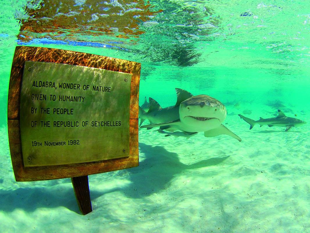 Sharks of Aldabra Atoll