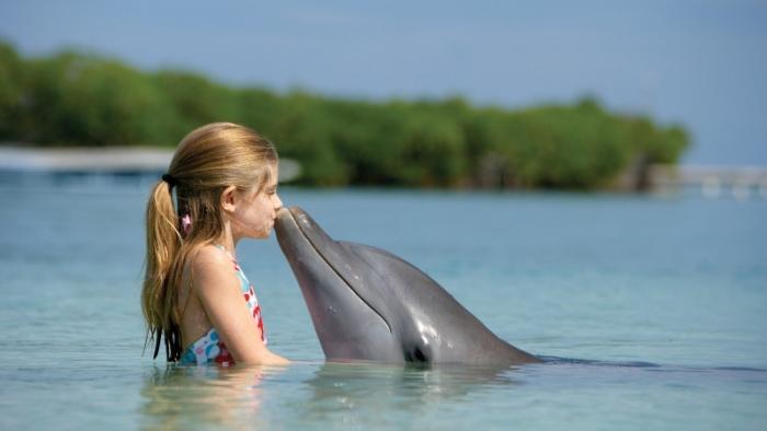 meet dolphin mauritius