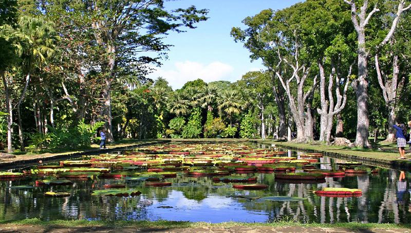 Botanical Garden- Mauritius