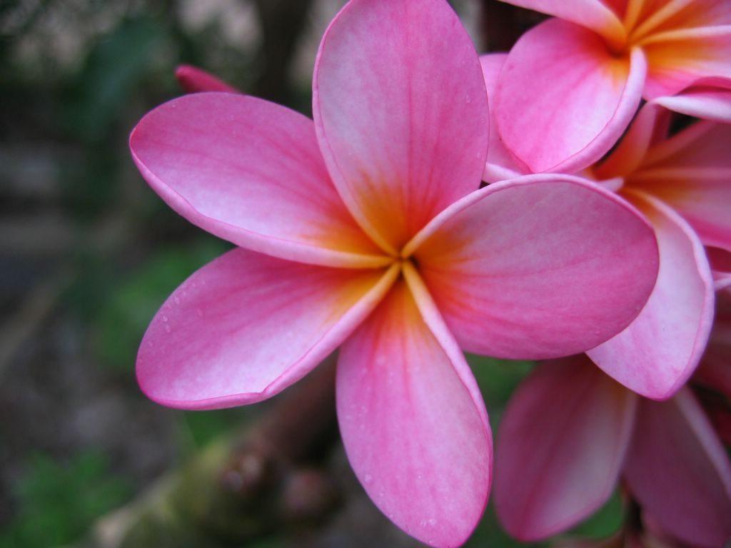 flower mauritius