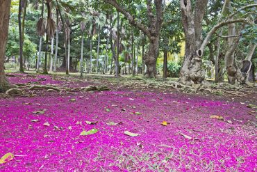 SSR Botanical Garden Pamplemousses Mauritius
