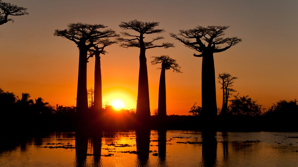 madagascar-highlights-avenue-de-baobab