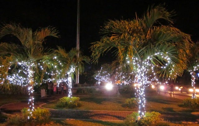 Palm trees with twinkel lights Seychelles