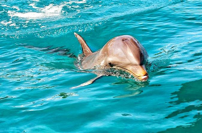 nature-discovery-tour-wild-dolphins-giant-tortoises-crocodiles-and-in-port-louis-239151