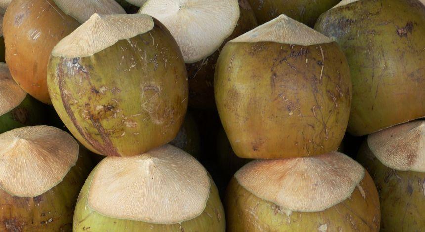 Coconut Seychelles