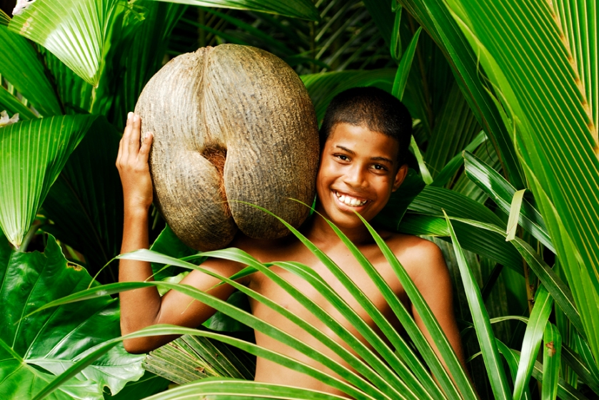 Sea coconut Seychelles