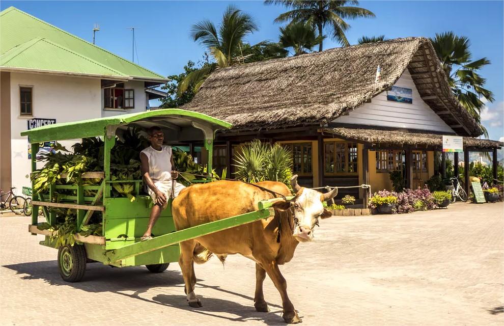 Ox Cart La Digue