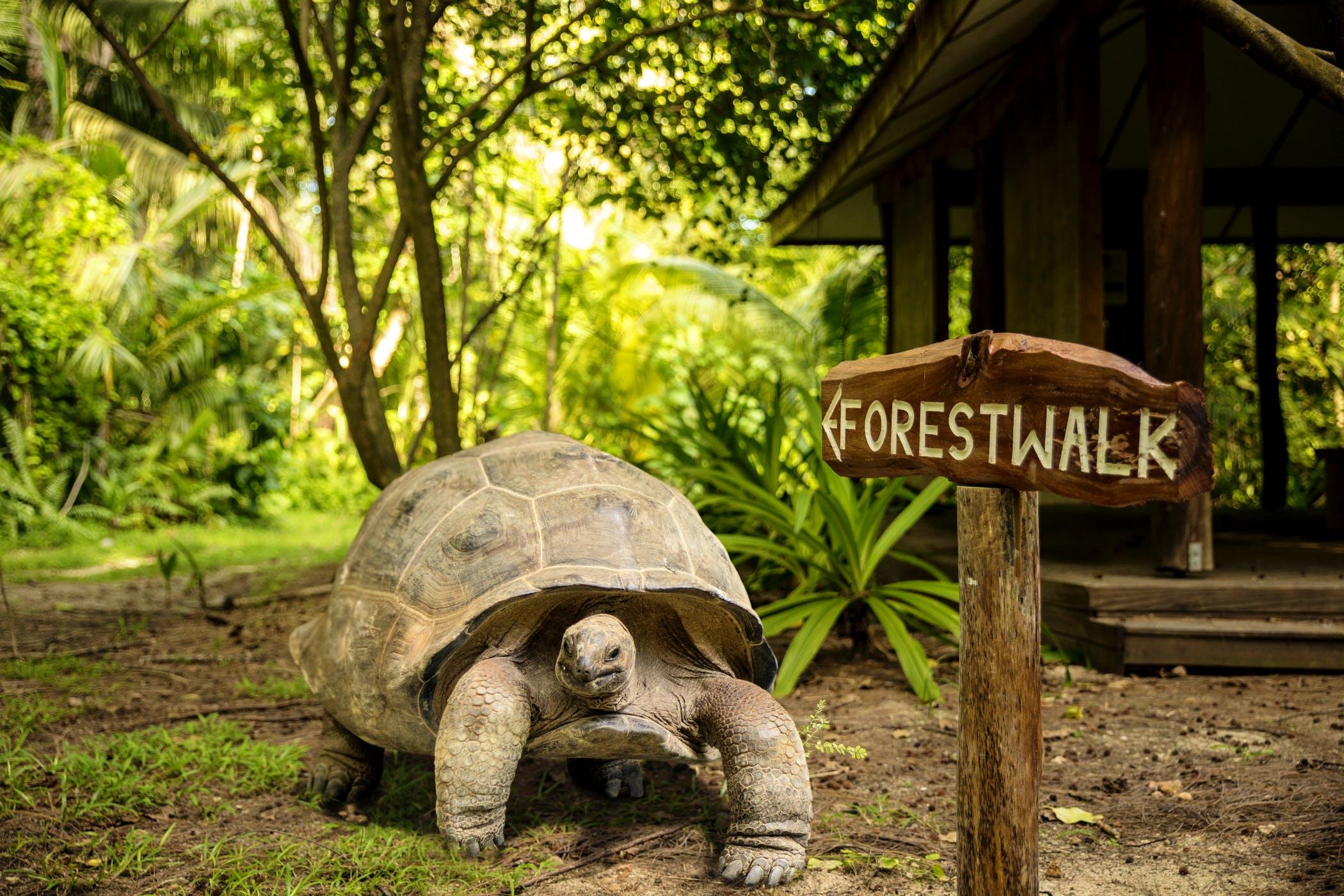 Tortoise Seychelles