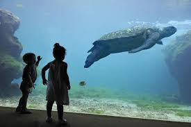 aquarium l'ile de la reunion